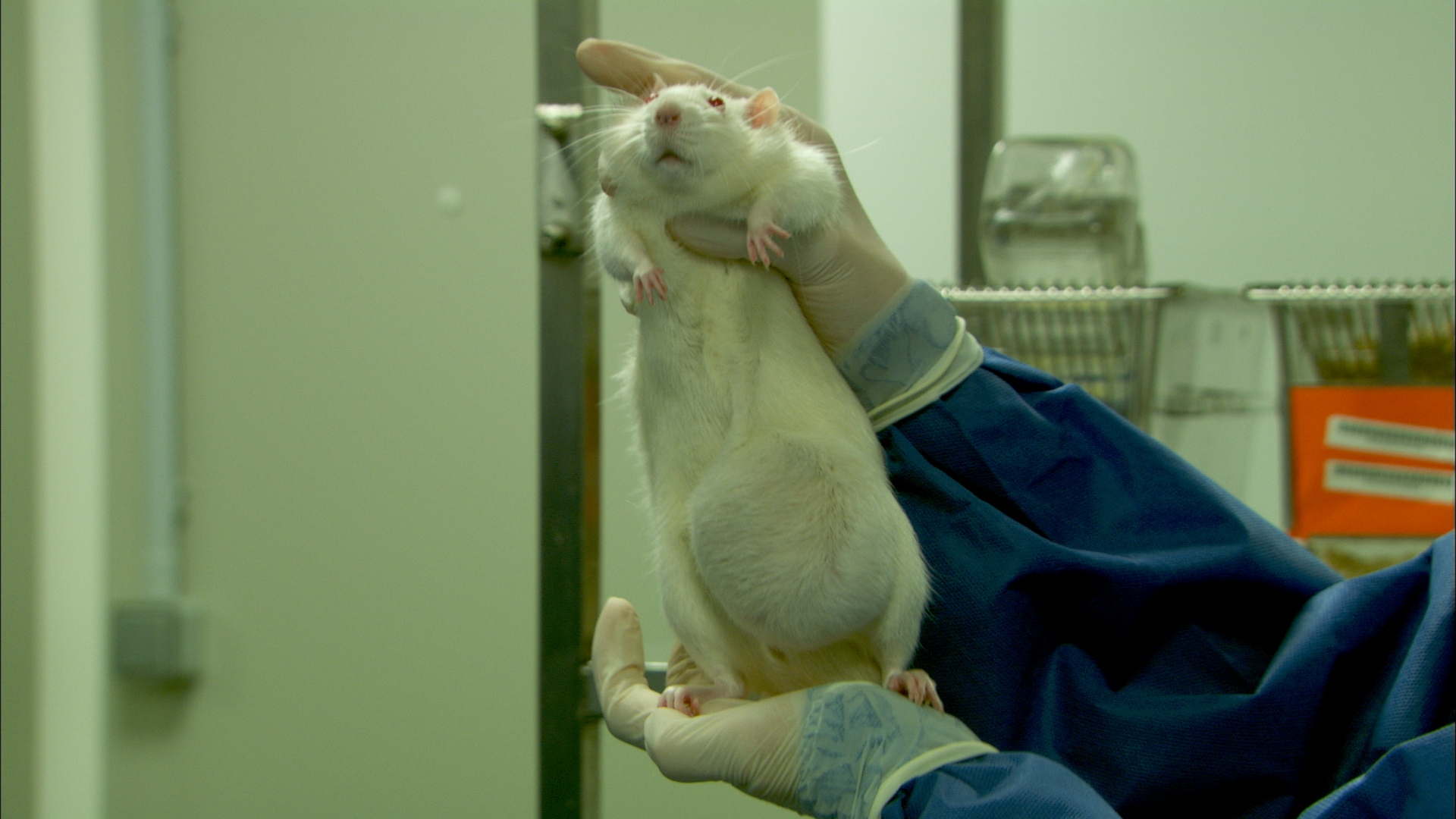 cancer in rats gm food debate Here are 7 pros and cons of genetically modified with knowing my food is gmo free the debate over gmos on a 3 year study on gm potatoes fed to rats.