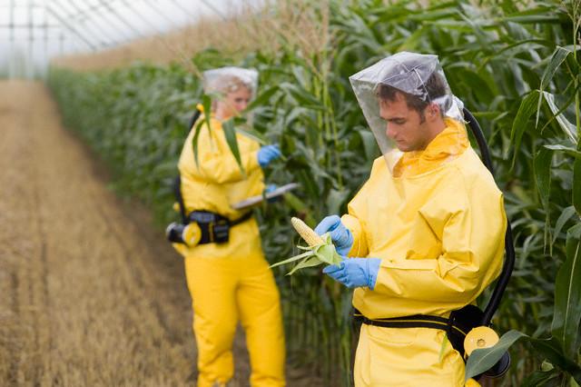 Германия требует права запрещать культивацию ГМО