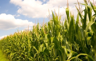 Seralini Calls for Retraction of 'Biased' EU Study on GM Maize
